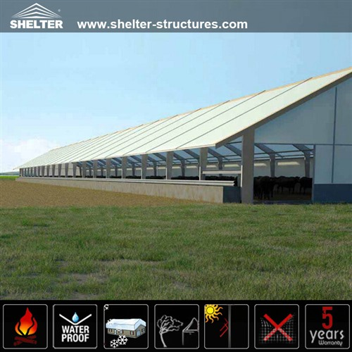 Cattle Shed: Reliable Agricultural Structures/Livestock Barns